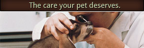 The Care Your Pets Deserve